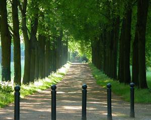 Potsdamer Parklandschaft